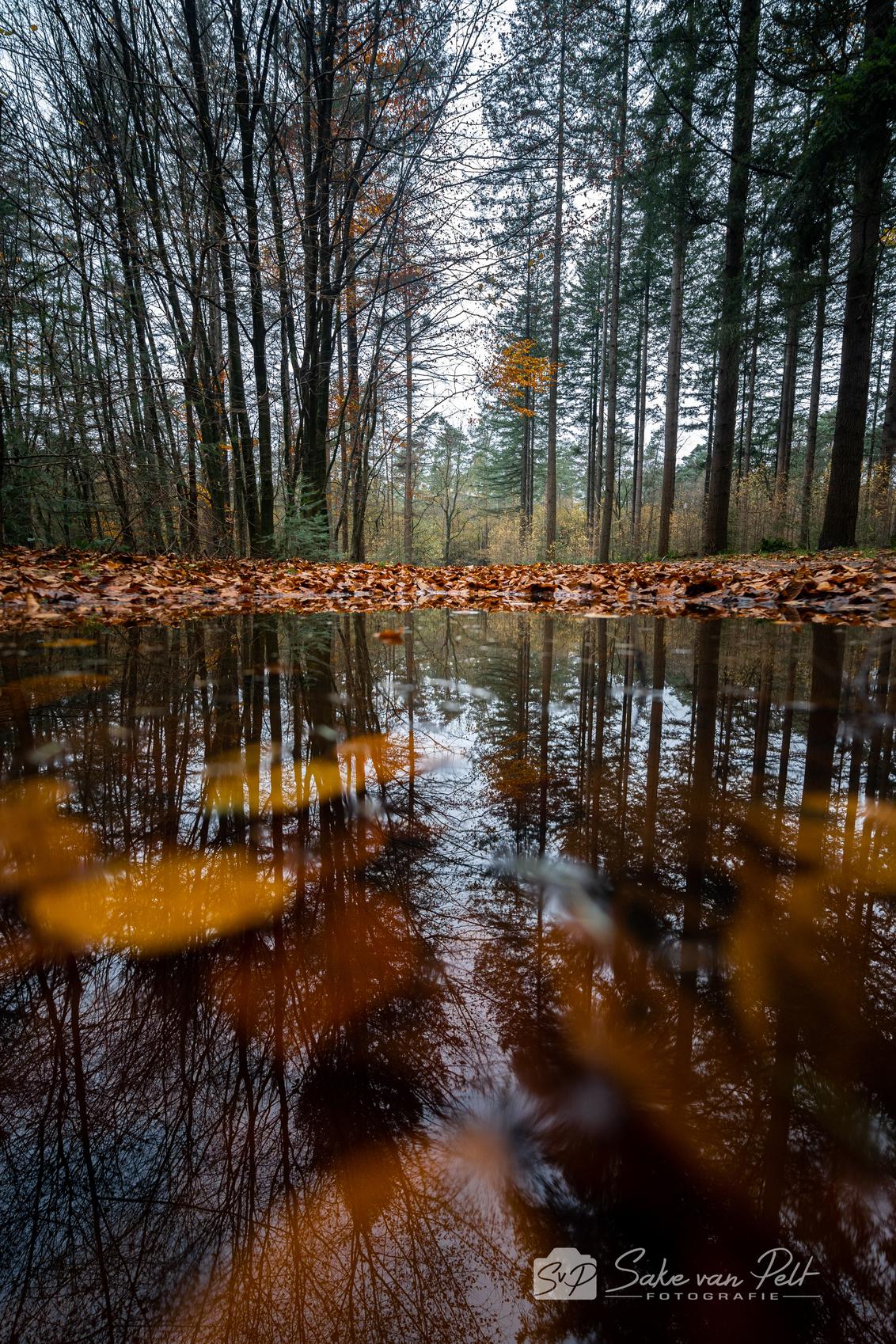 Herfstreflecties 2 - Deel twee van de reflecties. Deze foto heb ik gemaakt tijdens een wandeling door het Speulderbos. Het is wel lastig om zo laag te fotograferen terwij - foto door Sake-van-Pelt op 25-11-2020 - deze foto bevat: groen, lucht, wolken, spiegel, zon, boom, bladeren, water, natuur, bruin, druppel, geel, licht, herfst, blad, spiegeling, reflectie, landschap, bos, tegenlicht, nederland, reflecties, speulderbos, seizoen, seizoenen, beuken, dennenbomen