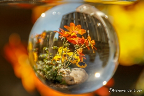 een kijkje in mijn glazen bol