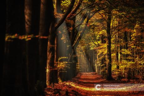 Herfst in het Sprielderbos