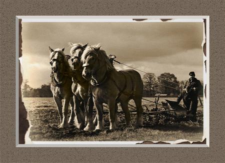 De boerenstiel 4 bis - Ik wil deze serie afsluiten, te veel van hetzelfde gaat langzaam vervelen he... Deze keer kon ik zelf niet kiezen, daar om plaats ik twee versies van - foto door kosmopol op 12-04-2012 - deze foto bevat: paarden, ploegen, span, kosmopol