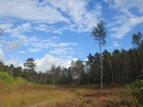luchten boven het bos in Ede