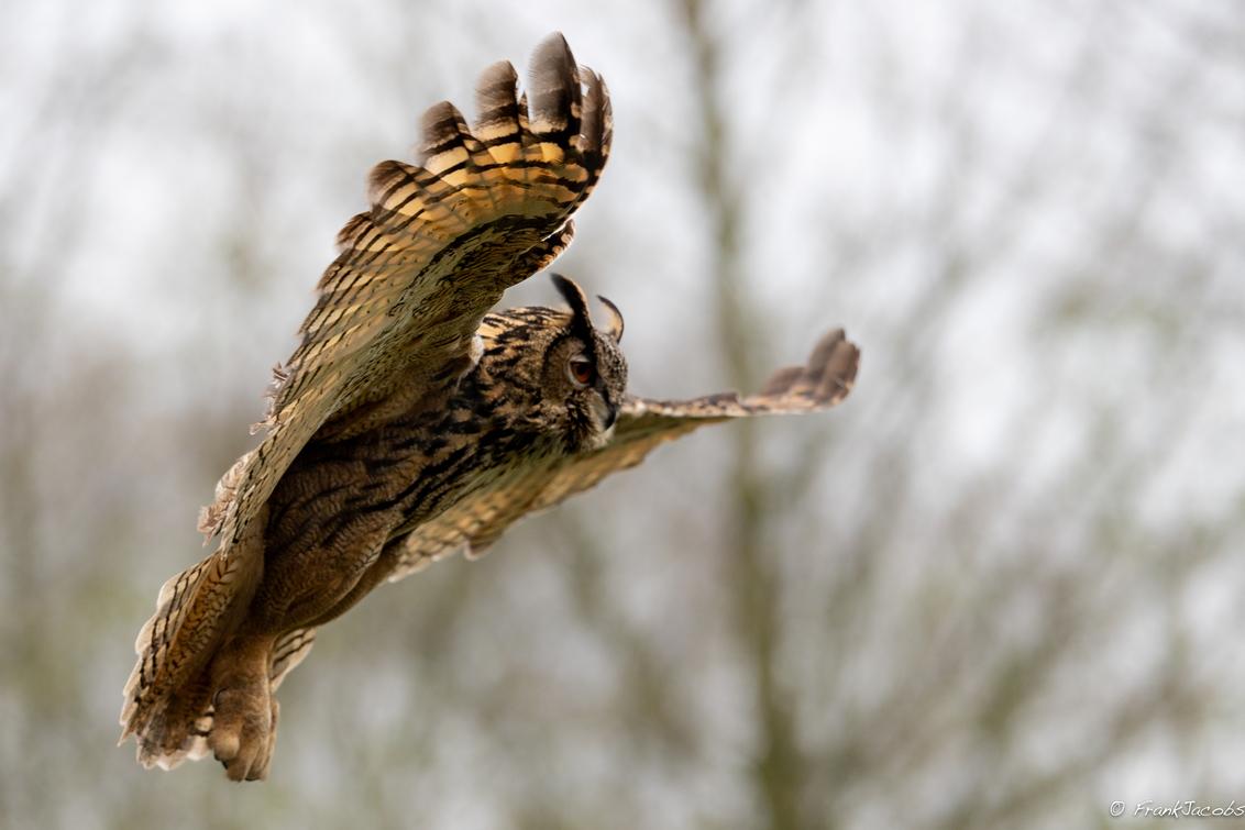 Hopaaaaa! - - - foto door frankjacobs op 12-05-2019 - deze foto bevat: uil, natuur, dieren, nikon, oehoe, wildlife, frank jacobs, frankjacobs, nikon d5