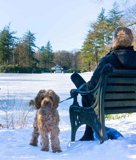 pa is aan schaatsen ma past op de hond
