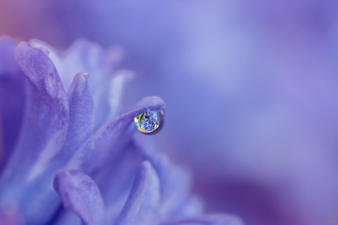 hyacinth - Bloemen staan niet lang bij mij, ze worden altijd slachtoffer van mijn probeerseltjes - foto door fronikawestenbroek op 30-12-2016 - deze foto bevat: macro, bloem, natuur, druppel