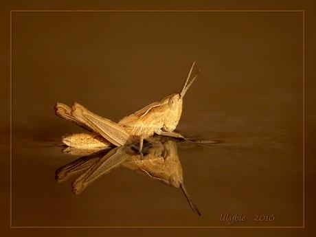 golden jumper takes a bath