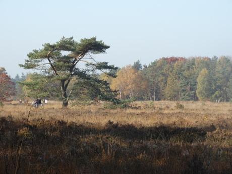 Ruphense Heide