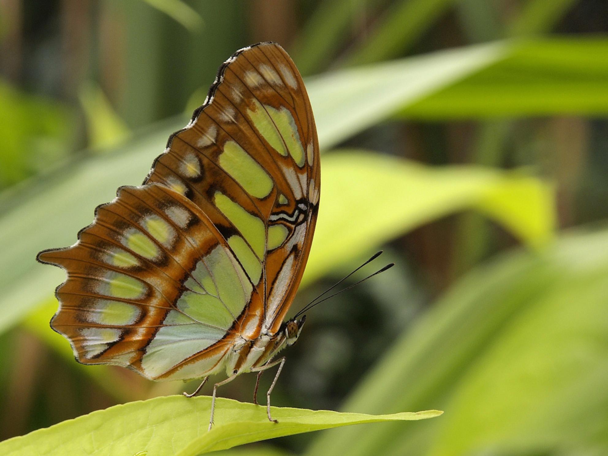 Vlinder - Blijdorp - foto door ErikSchollaart op 26-01-2014 - deze foto bevat: rotterdam, vlinder, blijdorp - Deze foto mag gebruikt worden in een Zoom.nl publicatie