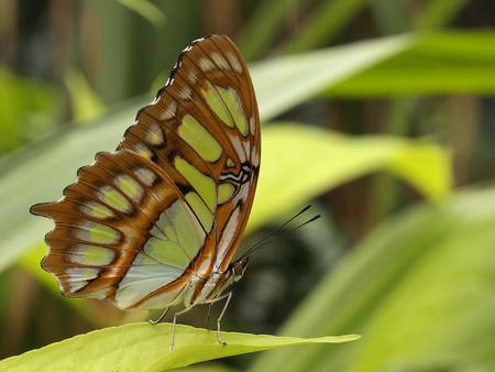 Vlinder - Blijdorp - foto door ErikSchollaart op 26-01-2014 - deze foto bevat: rotterdam, vlinder, blijdorp