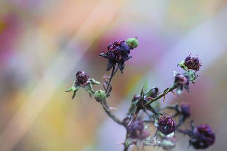 Bos kleuren