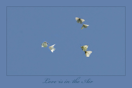 Love is in the air.....