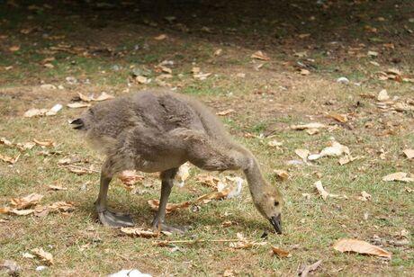 Een Trekvogel