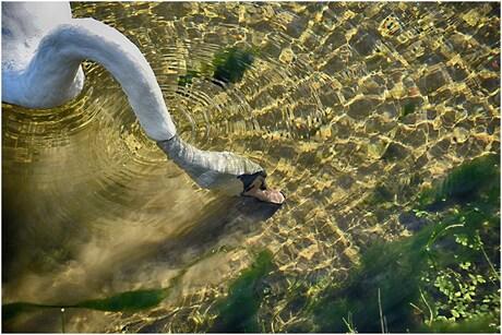 Helder water