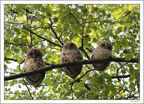 Knipogen naar de fotograaf!, hoog in de boom (2)