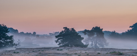 In de mist bij Wekeromse zand