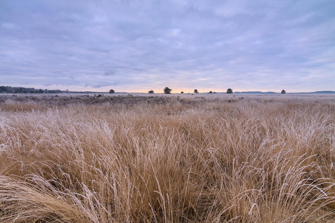 Heideveld - Een frisse ochtend op een heideveld bij Speuld. (07-03-2021) - foto door henrivanarkel op 07-03-2021 - deze foto bevat: lucht, wolken, licht, ochtend, rijp, heide, heideveld