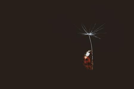 Mary Poppins - - - foto door Elianne92 op 25-12-2018 - deze foto bevat: rood, macro, zon, natuur, lieveheersbeestje, bruin, licht, zwart, insect, dof