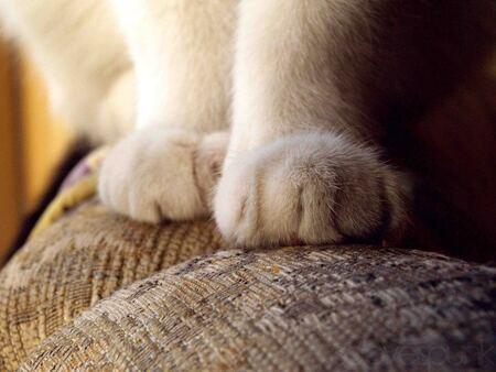 dikke tijgie - more here: https://www.facebook.com/FrederiqueNiewohnerPhotography - foto door SoLoveIsPunk op 05-10-2012 - deze foto bevat: macro, kat, tijger, pootjes, soloveispunk, dikke tijgie