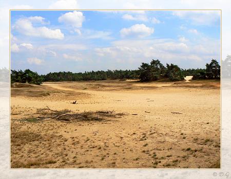 Kootwijkerzand - Zomer 2007 Kootwijkerzand - foto door daniel44 op 12-02-2008 - deze foto bevat: landschap, zand, natuurgebied, kootwijk, daniel44