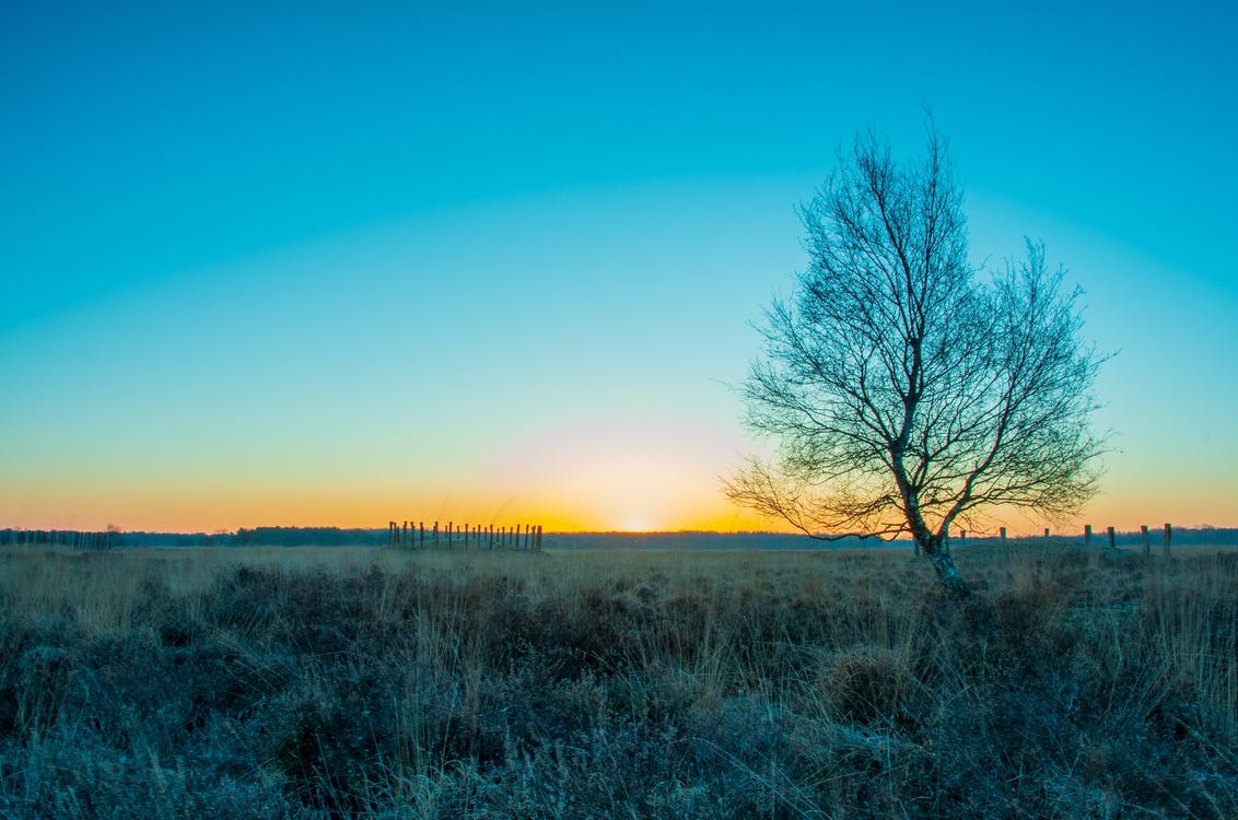 Good morning Holland - Sfeervolle zonsopkomst boven de Regte Heide, Riel - foto door jaapvanbijsterveldt op 05-03-2021 - deze foto bevat: zonsopkomst