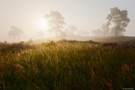 """Golden Morning - """"Golden Morning""""  Een heerlijke ochtend op de heide!  Volg me ook op mijn [url=https://www.facebook.com/rickkloekkephotography/] Facebook [/url]  - foto door RickKloekke op 19-09-2017 - deze foto bevat: gras, zon, foggy, veluwe, ochtend, oranje, landschap, mist, heide, gouden, tegenlicht, mistig, backlight, bomen, golden, goud, nederland, tree, morning, dutch, misty, gold, fog, serene, trees, Bloeiend gras, zonsopkosmt"""