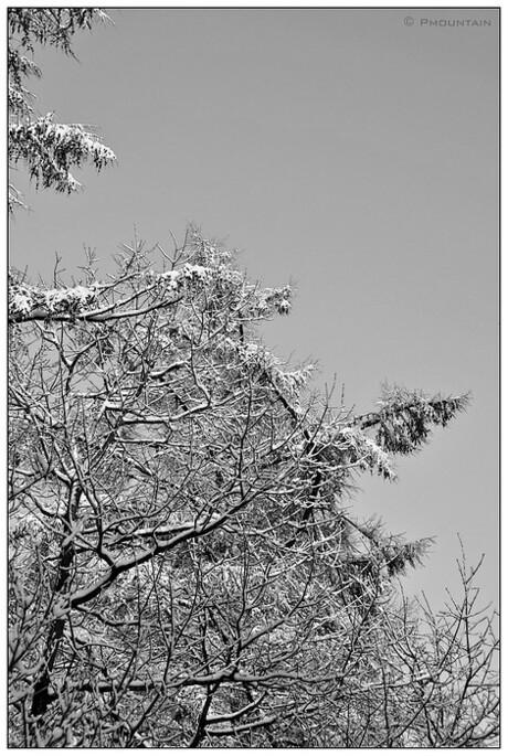 Zwart Wit Sneeuw