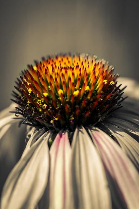 Zomaar een plantje