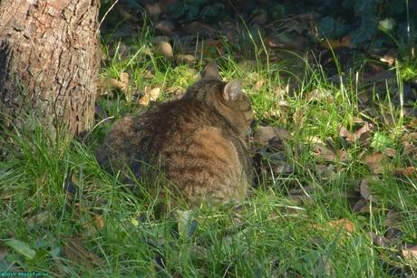 Neelix in de tuin.