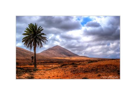 eenzame boom in een kaal landschap
