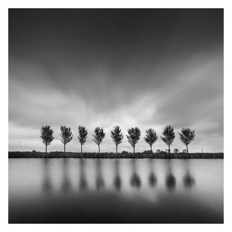 Bomen in de wind