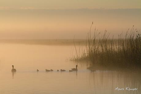 ochtend in de mist