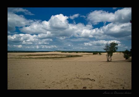 loons en drunense duinen - - - foto door rombo_zoom op 17-07-2009 - deze foto bevat: duinen, loon, drunen, loon op zand, loons en drunense duinen, zand brabant