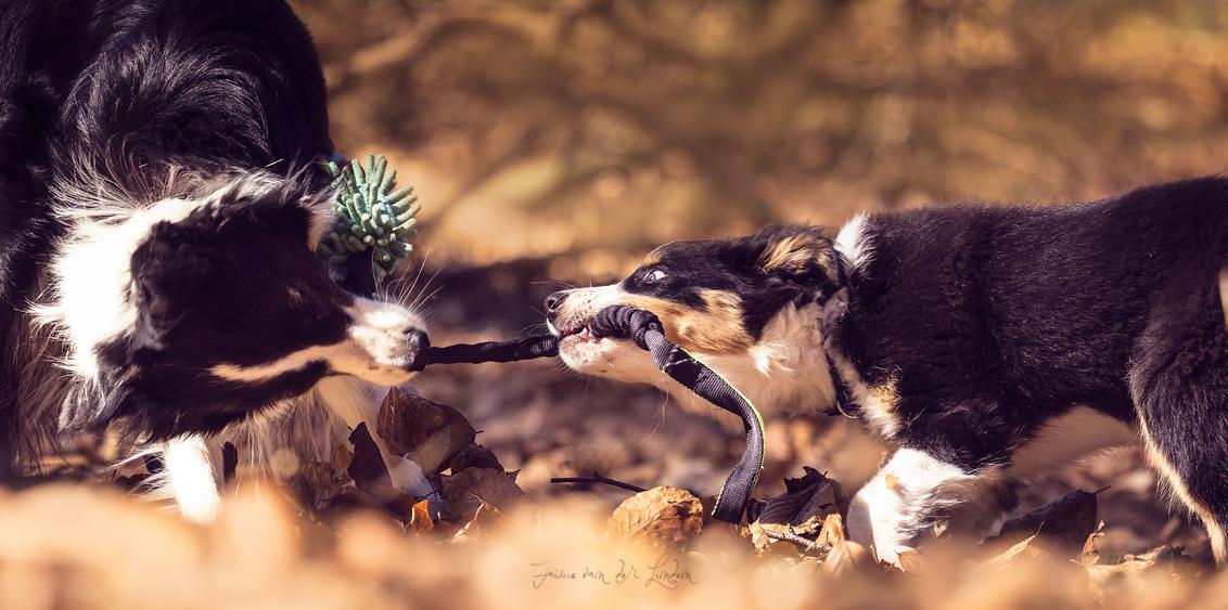 """playtime - F.H Kind of joy """"Joy""""en NOYTCB Coconut cream """"Keen, 6 jaar en 12 weken oud. Samen even lekker spelen in het bos - foto door jaime2205 op 23-03-2020 - deze foto bevat: dieren, hond, jong"""