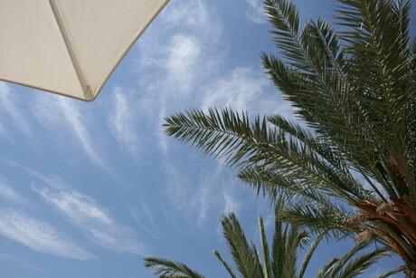 palm & parasol