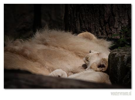 Lying in the morningsun