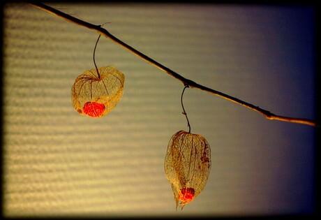 Lampionnetjes