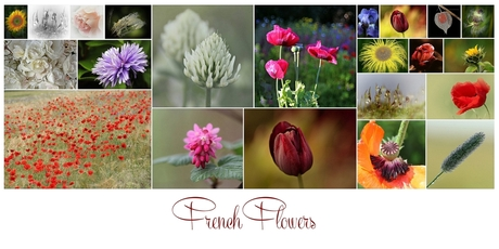 collage french flowers