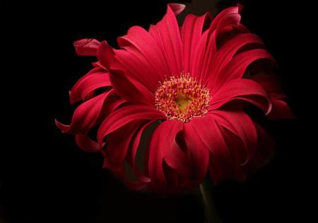 Bloemetje 2 - Hetzelfde bloemetje als gisteren maar nu helemaal met het hart en zijn wilde haren. Hoop dat hij nog lang zijn wilde haren zal behouden. Ik denk tro - foto door LadyLipstick1 op 25-02-2021