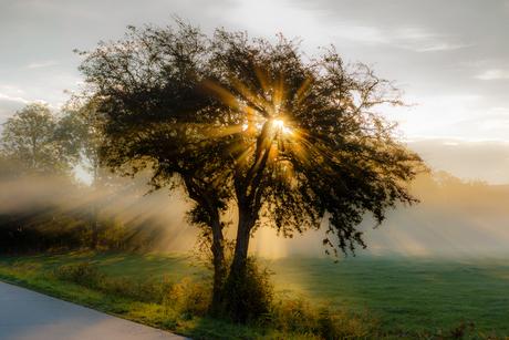 Mist en zonsopkomst, Magisch!