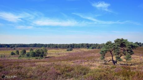 Landgoed ''de Hamert''