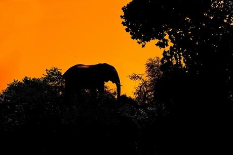 olifant op berg kl.jpg