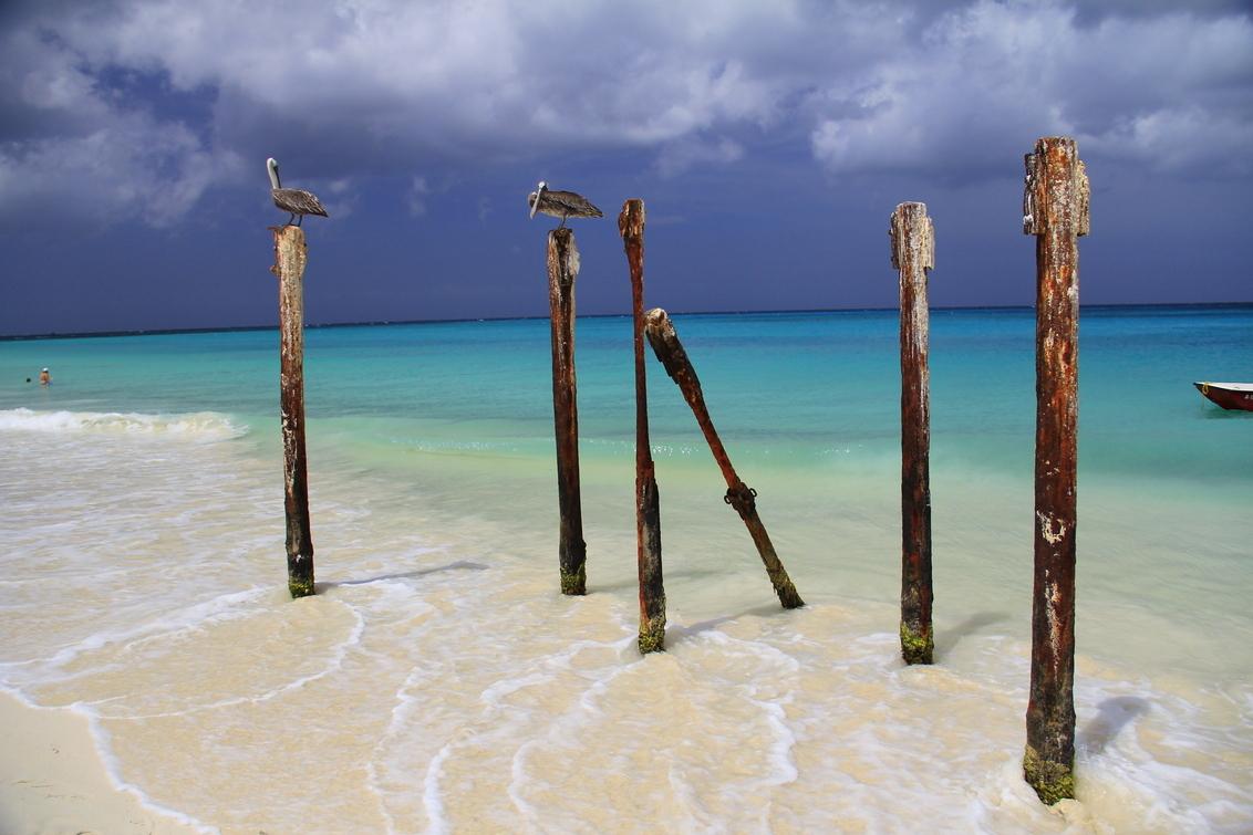 Aruba - Stage lopen op Aruba ... een ervaring om nooit te vergeten ! - foto door joey-sch op 13-06-2013 - deze foto bevat: zee, palen, stand, beach, pelikanen, sand, aruba, Druif beach