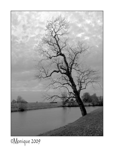 Bewerking: de boom van Pisa