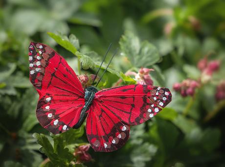 vlinder-b