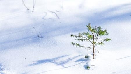 Bargerbos - Hier een opname uit het Bargerbos de laatste uit deze serie hele serie is nog te zien op mijn site [url]http://www.fotovictoir.nl/[/url] bij als laat - foto door victoir_zoom op 03-03-2021 - deze foto bevat: natuur, licht, sneeuw, winter, landschap, bos