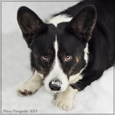 Sneeuw Portret