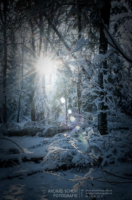 Winter in natuurgebied Het Leesten