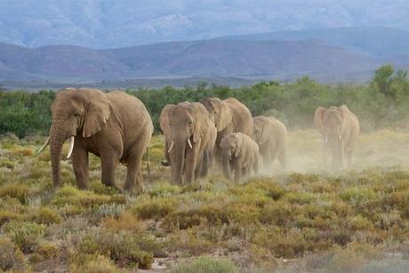 Elephants evening walk
