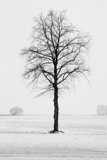 Solo-boom winter - Ik zag je staan en kon het niet laten om er een foto van te maken.  Dank voor alle reacties op mijn vorige foto's.   Groet Kees - foto door Santakees op 12-02-2021 - deze foto bevat: winter, landschap, bomen, alleen, solo, zwart-wit