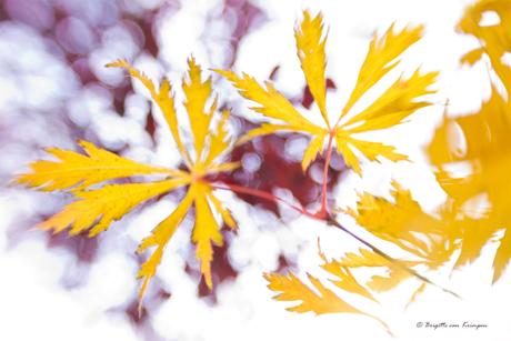 Autumn moves