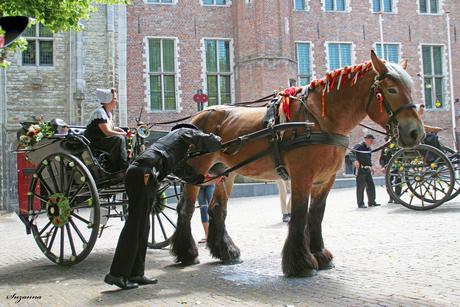 Tja ook een paard moet zijn melk kwijt kunnen